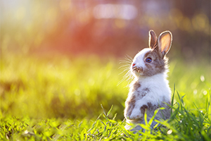 Brown and white bunny standing on its hind legs in the long grass