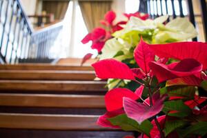 Poinsettias on s staircase