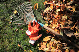 Rake and garden gloves on a pile of leaves