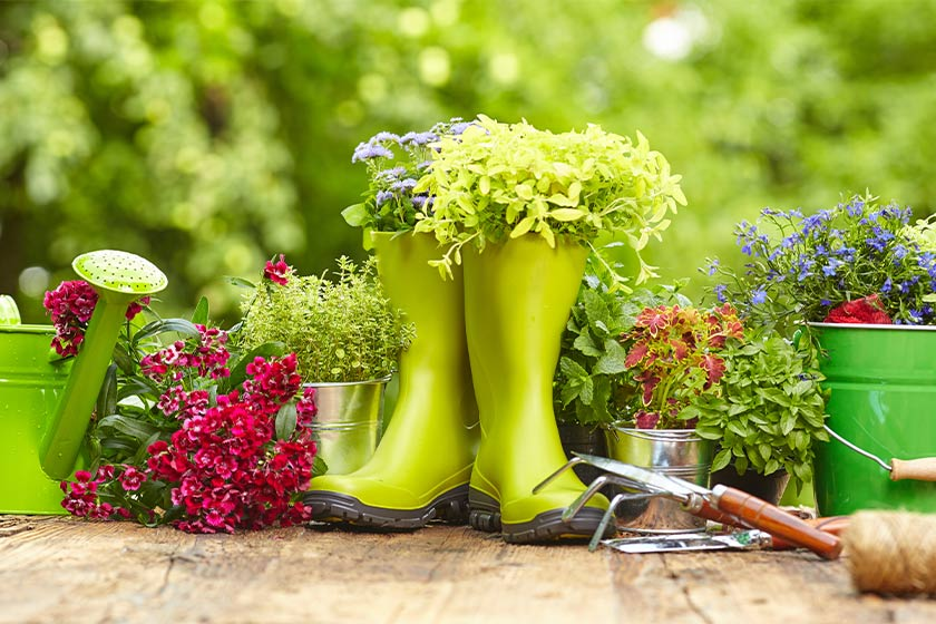 Flowers plated in gardening tools on a wooden table