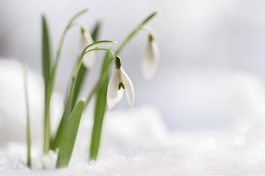 A picture of January Gardening Advice